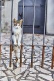 Il gatto guarda fuori da dietro il recinto Gatto sveglio montenegro Estate immagini stock
