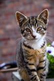 Il gatto guarda nella macchina fotografica fotografia stock libera da diritti