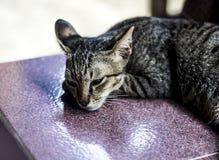 Il gatto ha voluto dormire Fotografia Stock