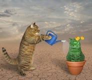 Il gatto innaffia il cactus insolito immagine stock libera da diritti