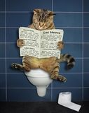 Il gatto legge un giornale sulla toilette fotografie stock