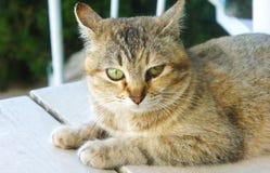 Il gatto macchiato a strisce considera il pavimento Fotografie Stock