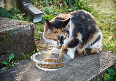 Il gatto mangia Immagini Stock