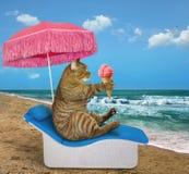 Il gatto mangia il gelato sulla riva di mare immagini stock