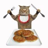 Il gatto mangia i tortini della carne fotografia stock
