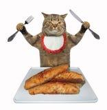 Il gatto mangia la trota fritta fotografia stock