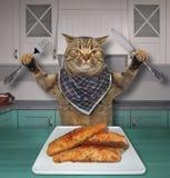 Il gatto mangia la trota fritta in una cucina fotografie stock libere da diritti