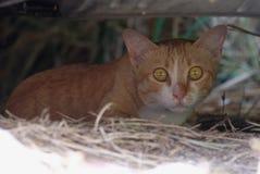 Il gatto marrone del primo piano si siede al giardino immagini stock libere da diritti