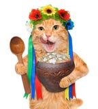 Il gatto nel costume ucraino tradizionale tiene in varenyky nazionale della minestra delle zampe Fotografia Stock Libera da Diritti