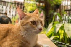 Il gatto nel giardino sta cercando fotografia stock