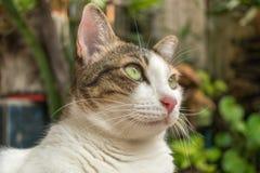 Il gatto nel giardino sta cercando immagini stock