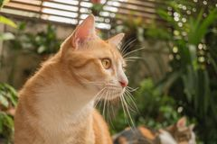 Il gatto nel giardino sta cercando fotografia stock libera da diritti