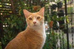 Il gatto nel giardino sta cercando immagine stock libera da diritti