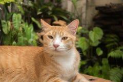 Il gatto nel giardino sta cercando fotografie stock