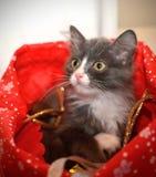 Il gatto nella borsa immagine stock