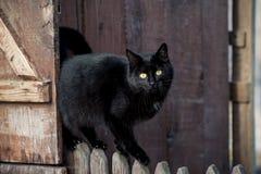 Il gatto nero è così mysterios Fotografia Stock