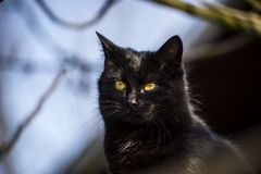 Il gatto nero è così mysterios Fotografie Stock Libere da Diritti