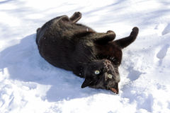 Il gatto nero Fotografia Stock Libera da Diritti