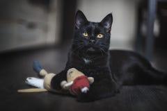 Il gatto nero Fotografia Stock