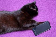 Il gatto nero ama mangiare con un coltello e biforcarsi perché ritiene che sia diventato un membro di questa famiglia per la merc immagini stock libere da diritti
