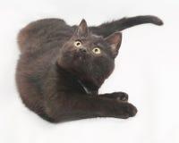 Il gatto nero con giallo osserva la menzogne, piegata Fotografia Stock Libera da Diritti