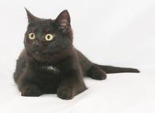 Il gatto nero con giallo osserva la menzogne, sembrante sorpresa al lato Immagini Stock Libere da Diritti