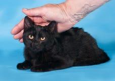 Il gatto nero con giallo osserva la menzogne sul blu per la mano umana Immagine Stock