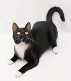 Il gatto nero con gli occhi bianchi di giallo e dello sparato sta, aspetta a Fotografie Stock