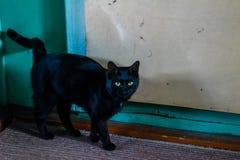Il gatto nero con gli occhi gialli fotografia stock libera da diritti