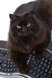 Il gatto nero ed il calcolatore hanno isolato Immagine Stock