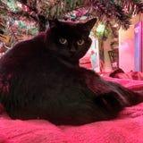 Il gatto nero grasso con giallo osserva sotto l'albero di Natale immagine stock libera da diritti