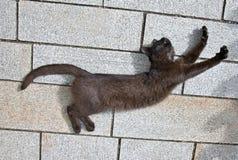 Il gatto nero sta allungando Immagini Stock Libere da Diritti