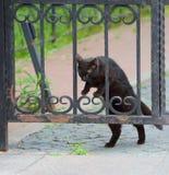 Il gatto nero striscia attraverso le barre del portone immagini stock