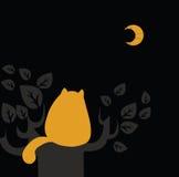 Il gatto osserva sulla luna Fotografia Stock Libera da Diritti
