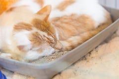 Il gatto in perso indesiderato salvato riparo animale dell'animale domestico aspetta per adozione Fotografia Stock