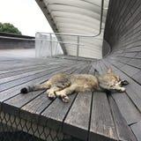 Il gatto pigro sul ponte Immagini Stock Libere da Diritti