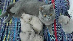 Il gatto prende la cura dei gattini archivi video