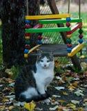 Il gatto prende il sole di mattina sole fotografia stock