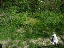 Il gatto prende il sole sul percorso vicino ai wildflowers fotografia stock