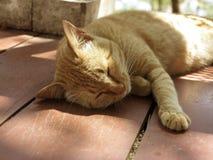 Il gatto prende un pelo Immagini Stock Libere da Diritti
