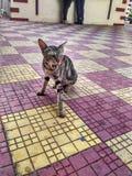 Il gatto in pubblico Fotografia Stock Libera da Diritti