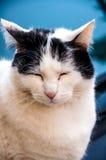 Il gatto riflettente Immagini Stock Libere da Diritti