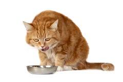Il gatto rosso con gli occhi arancioni fotografie stock libere da diritti