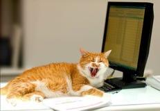 Il gatto rosso ride sul calcolatore Fotografia Stock