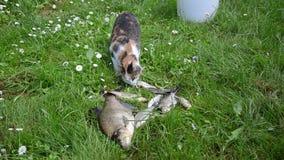Grande pesce gatto filmati stock 66 grande pesce gatto for Pesce gatto acquario
