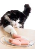 Il gatto ruba le salsiccie Fotografia Stock