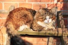 Il gatto rustico sul recinto è riscaldato nei raggi del tramonto fotografie stock libere da diritti