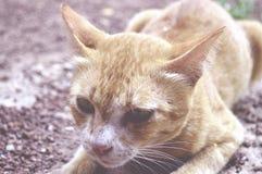 Il gatto salterà fino alla preda del fermo immagini stock libere da diritti