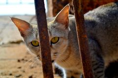 Il gatto sembra grande Fotografia Stock