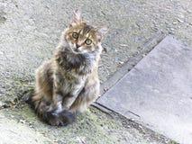 Il gatto senza tetto più bello Fotografia Stock